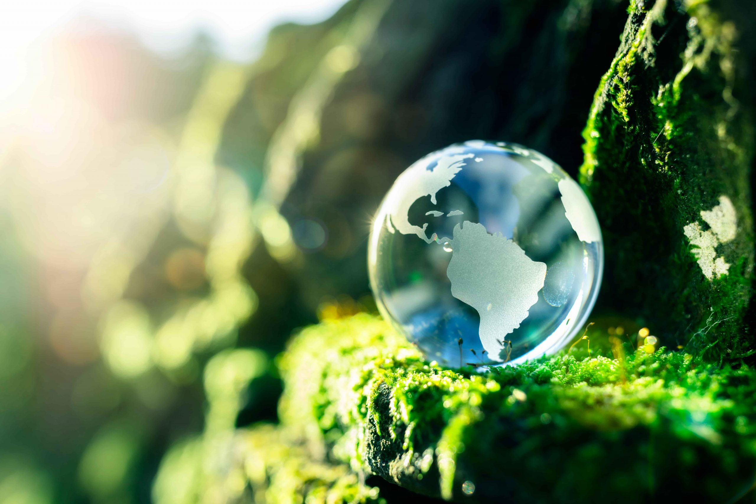 The World Environment Day 2021